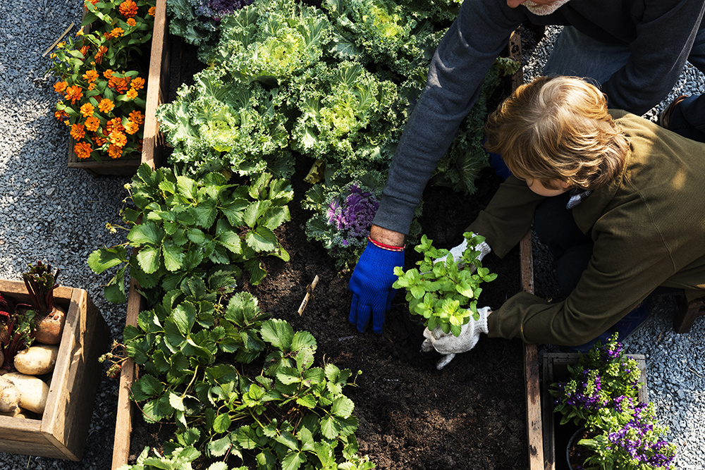 The Benefits and How to Create a Vegie Patch