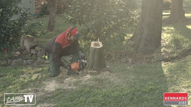 Create a flat cut at the base of the stump with the large chainsaw.