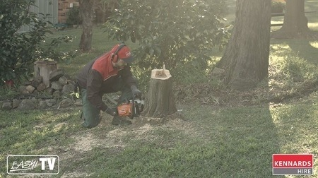 Cut your stump so that it is about 100 millimetres above the ground.