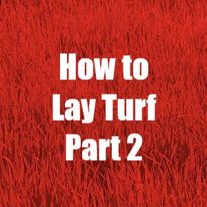 How to lay turf part 2 from Kennards Hire NZ